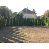 Smaragdthujen 140/150 cm
